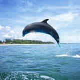 Cancún: delfines atacaron a una nena de 10 años durante un show acuático