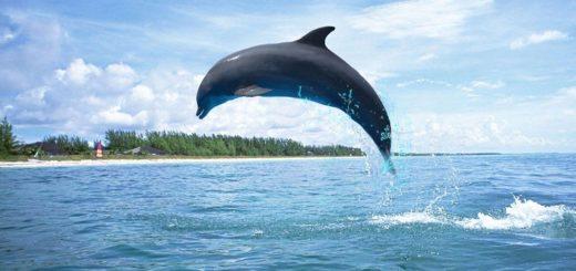 El triste video de una madre delfín con su cría que recorre el mundo