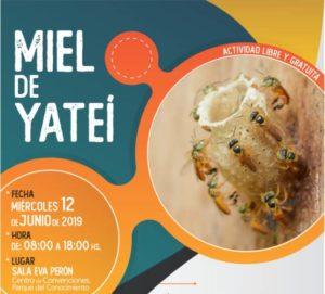 Realizarán jornada de intercambio de saberes sobre la miel Yateí