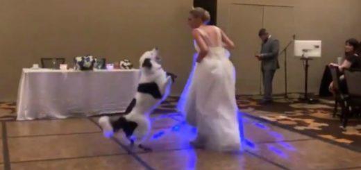 #Video: la novia que baila con su perro en la fiesta de casamiento