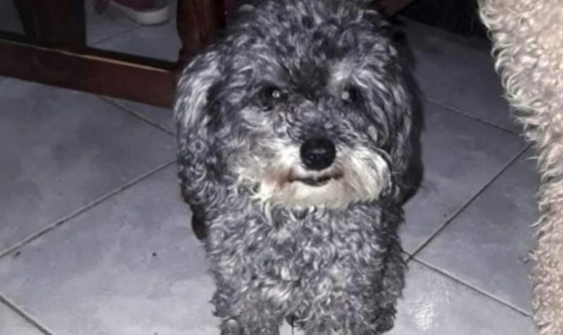 El tierno pedido de un nene con autismo: su perro se perdió y ofrece su bicicleta a quien lo encuentre