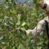 En mayo, el consumo de yerba mate mantuvo su tendencia positiva