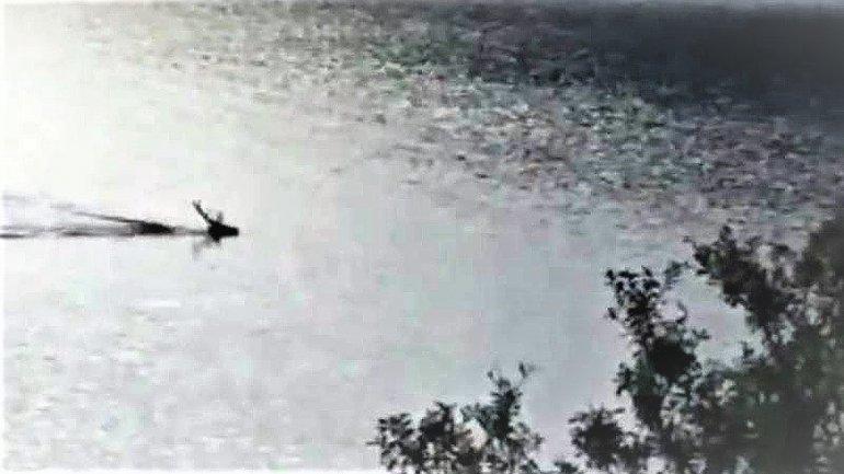 #Video: un ciervo cruzó nadando el lago Nahuel Huapi