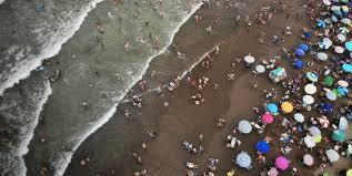 Una joven fue atacada por tres perros en una playa de Mar del Plata: está internada en terapia intensiva