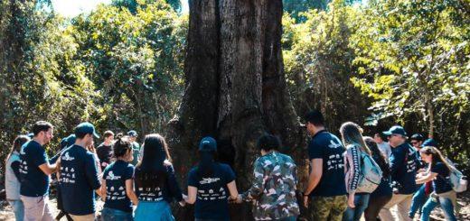 """Argentina Forestal y Misiones Online se suman a una magnífica expedición ambiental para dar a conocer a los """"Colosos de la Tierra"""", los árboles gigantes de Paraguay"""