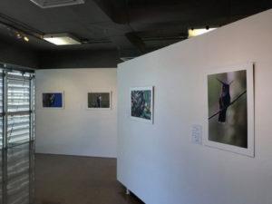 Reciben trabajos fotográficos en formato digital e impreso para una muestra en el Parque