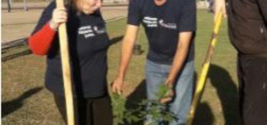 """Programa """"20.000 árboles"""": el Municipio ya plantó más de 7000 ejemplares"""