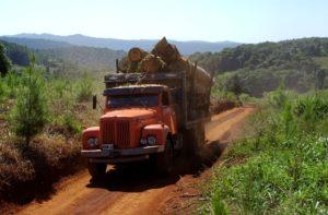 Misiones combatirá la ilegalidad en el comercio de madera nativa con nuevo sistema digital de control forestal