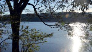 """Puerto Rico: promueven la revalorización de Monte Seguin, un área que protege la Selva """"ribereña"""" Paranaense"""
