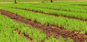 Ley 25.080: La Nación inició nueva partida de pagos por más de 164 millones de pesos para el incentivo forestal, y más de 34 millones beneficiarán a productores misioneros