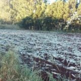 Las fuertes heladas dañaron producciones de feriantes de la Zona Centro de Misiones