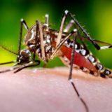 Recomiendan que en este periodo interbrote del dengue se intensifiquen las medidas de prevención