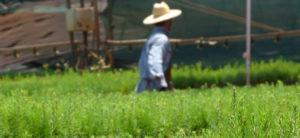 Ley 25.080: Agroindustria aprobó actualización de costos de planes forestales de proyectos presentados en 2017 y 2018