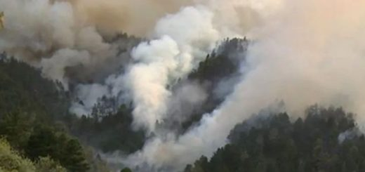 Voraz incendio en la isla de Gran Canaria: 1.500 hectáreas quemadas y 4.000 evacuados