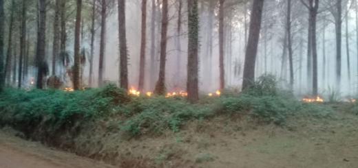 Se incendió un secadero en Colonia Gisela