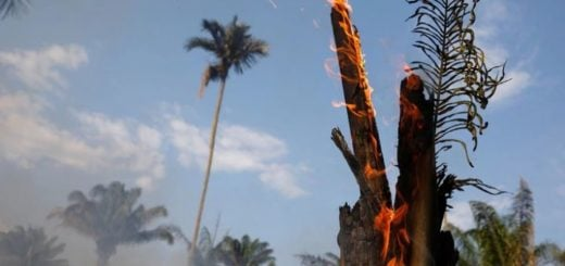 La respuesta que divide a Brasil: cuál es la principal causa de los incendios en la Amazonía