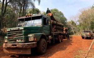En la reserva de Biosfera Yabotí realizaron un megaoperativo para combatir la caza furtiva y apeo ilegal de bosques nativos