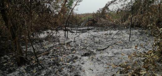 WWF Paraguay: hay 37 mil hectáreas afectadas por los incendios que incluyen áreas del PN Río Negro, el Pantanal Paraguayo y el Cerro Chovoreca