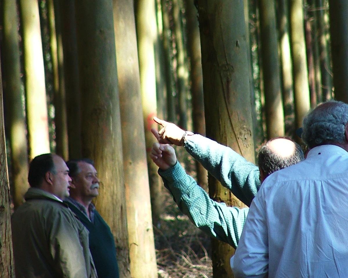 El ejercicio profesional del manejo ético y sustentable de los bosques en manos de los ingenieros forestales