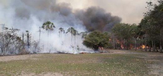 Paraguay declara la emergencia ambiental por los incendios forestales en el Pantanal