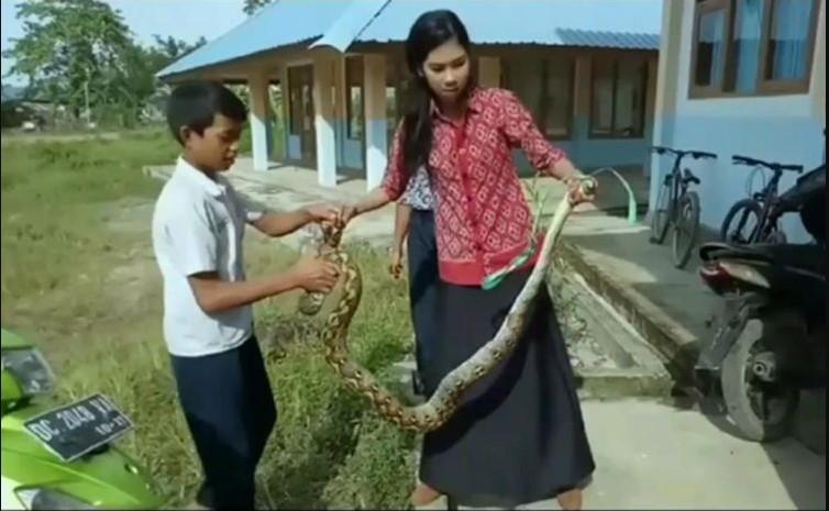 Video: una maestra capturó a una serpiente para proteger a sus alumnos