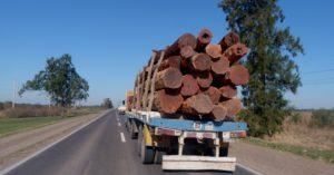 Ingenieros forestales debatirán las bases para la sostenibilidad de la actividad forestal en la región chaqueña