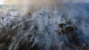 Incendio en la Amazonia: donde hubo fuego, hay que restaurar la selva