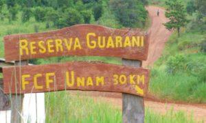 Un árbol gigante de la Reserva de Usos Múltiples Guaraní de la UNaM será visitado por la comitiva paraguaya de Colosos de la Tierra