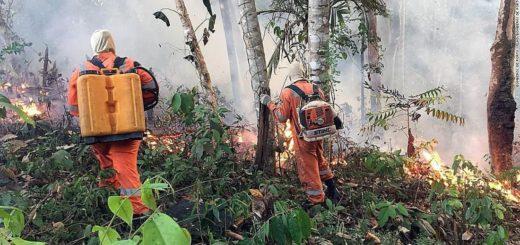 Incendios en el Amazonas: experto misionero explicó que la zona de quemas llegó al área de transición y biomas cerrados de la selva brasileña
