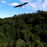 Aves Argentina muestra la belleza de la avifauna del Sur misionero a través de una muestra fotográfica y charlas en Posadas