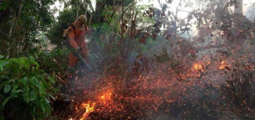 Bomberos argentinos viajarán a Brasil para combatir el fuego en Amazonas