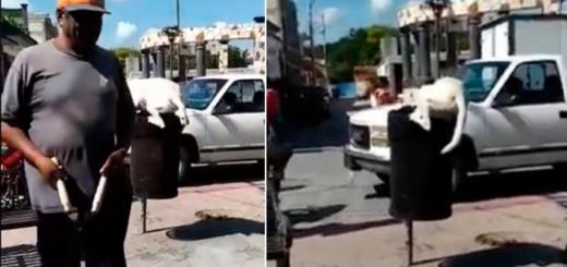 #MaltratoAnimal: denuncian en redes sociales a un hombre que le cortó la cola a un perro mientras buscaba comida en un basurero