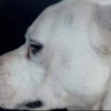 Tragedia en Mendoza: un dogo mató a una nena de un año