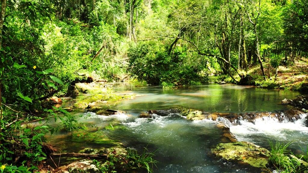 Selva Misionera: el bosque más biodiverso de Argentina, productora de vida para futuras generaciones, es una de las 7 Maravillas Naturales de Argentina