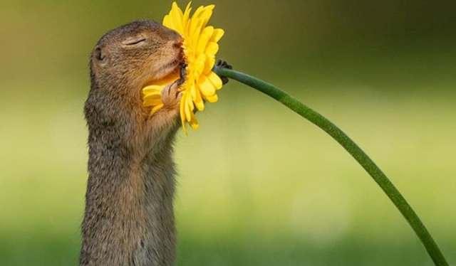 Viral: la increíble foto que captura el momento exacto en el que una ardilla huele una flor