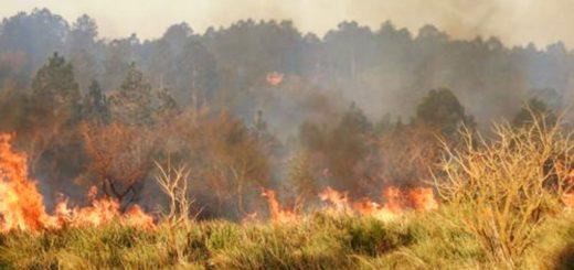 Continúan los incendios en áreas sensibles: se quemó un predio lindante al Teyú Cuaré