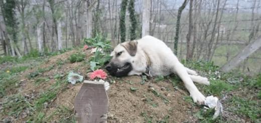 """""""Zozo"""", el perro que visita la tumba de su dueño todos los días desde hace cinco años"""