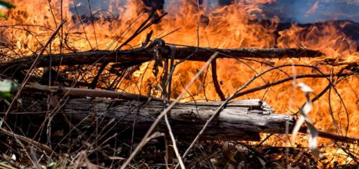 En menos de 8 horas hubo 6 incendios forestales en Andresito: denuncian que todos fueron intencionales