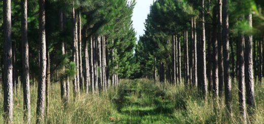 ¿Qué calidad de madera produciremos en el futuro?