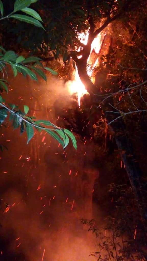 """Tras quemarse """"la grapia milenaria"""" de Campo Ramón, Ecología asistirá al lugar para ver si puede salvar parte del árbol"""