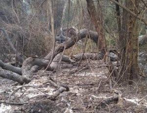 """Bomberos Voluntarios de Andresito siguen socorriendo incendios forestales: """"Hoy se registraron dos focos simultáneos en las chacras, el riesgo es extremo y rige la prohibición de quemas"""""""