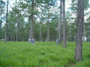 """Desde Afome proponen un plan """"Poda"""" que podría generar 10 mil puestos de trabajo en plantaciones de Misiones y Corrientes"""
