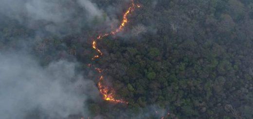 Paraguay: Graves daños ambientales al Bosque Atlántico por los incendios forestales que afectan a la Reserva Natural Mbaracayú
