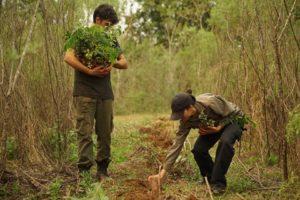 Acción ambiental en Andresito: en la reserva privada San Sebastián restauran ambientes de la Selva Misionera y reforestan con 7 mil nuevos árboles nativos
