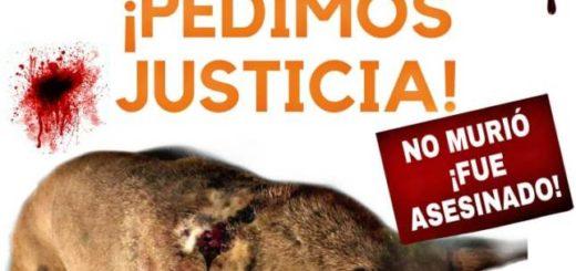 Marcha contra el maltrato animal: exigen justicia por el perro comunitario baleado en Posadas