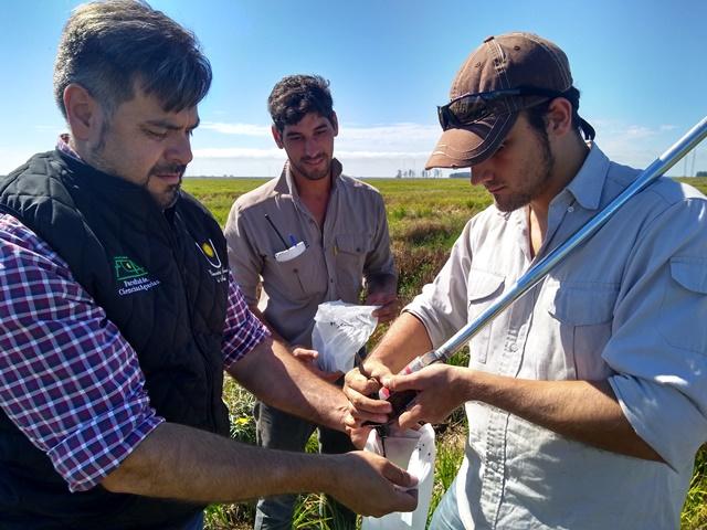 Control de las malezas: la intervención agroecológica como alternativa a la ineficacia de los herbicidas