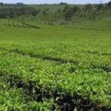 El ministro Garay informó a la Co.Pro.Té el nuevo precio de la materia prima