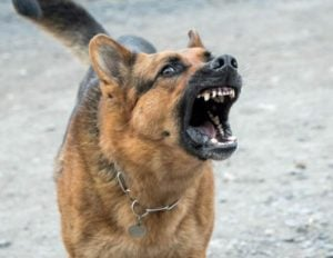 Una jauría de perros atacó a un militar retirado mientras jugaba golf en Sierra de los Padres