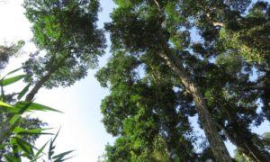 Convocaron a la comunidad de Iguazú a la presentación del proyecto de ampliación del Loi Suites en las 600 hectáreas