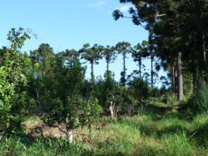 El desarrollo forestal sostenible, sinergia positiva para el progreso regional
